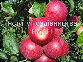 Яблуня Амулет, пізньоосінній сорт