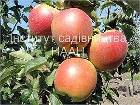 Яблуня Гарант, пізньозимовий сорт
