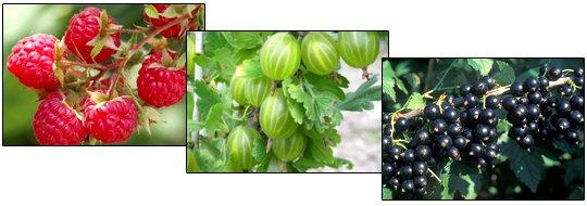 Напрями досліджень cелекційно-техологічного відділу плодових і ягідних культур